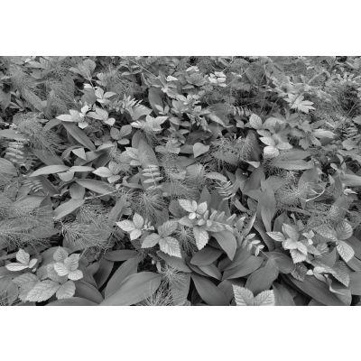 Fototapeta Forest Floor 368x254 Cm Komar Wyposażenie I